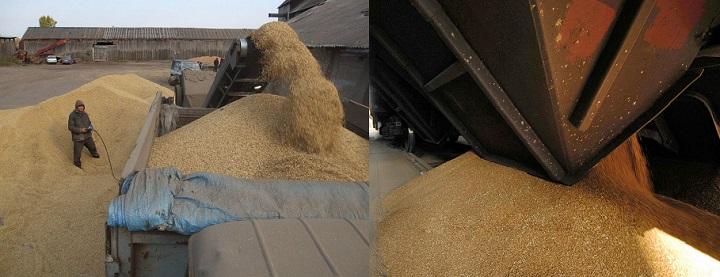 Поставки пшеницы в Ирак в октябре 2019 года
