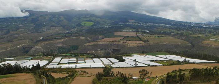 Плантация цветов в Эквадоре в горной долине.