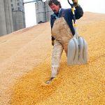 Цены на кукурузу в октябре 2015 года в Иране