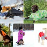 Одежда для собак.