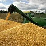 Цены на сентябрь 2014 года: Кукуруза 3 класса ГОСТ 13634-90
