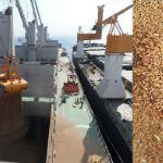 Цены на фуражную пшеницу в Туркменистане и Иране