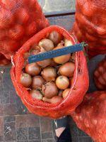 Шаварш — овощи крупным оптом