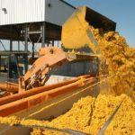 Цены на кукурузную барду в Турции