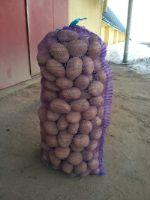 опт картофеля из Беларуси