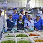 производство и реализация арахиса в хрустящей корочке оптом