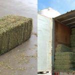 Цены на сено в Персидском заливе
