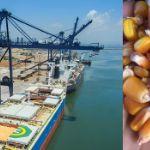 Цены на кукурузу в Омане (на сентябрь 2019 год)