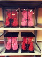 мишки из роз оптом в наличии