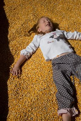 Цены на кукурузу в декабре 2015 года в Улан-Баторе, Монголия