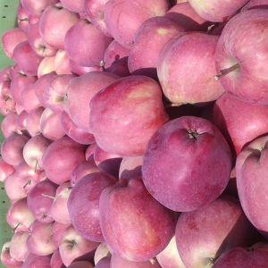 Яблоки Сербия.