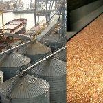 Цены на пшеницу в сентябре 2020 года