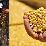 Цены на кукурузу в Иране в феврале 2020 года