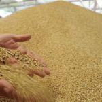 Цены на пшеницу в Алжире в мае 2020 года