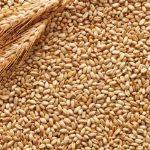 Цены на зерно в январе 2016 года