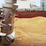 Цены на пшеницу в Саудовской Аравии