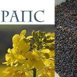 Рапс масличный— новый урожай 2019— продажа !!!