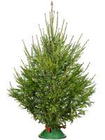 дешевые живые новогодние елки и сосны оптом без посредников