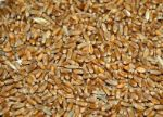 Пшеница 5 класса в Оренбурге wh.5oreng