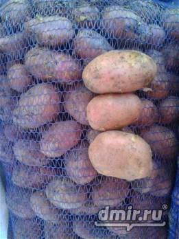 ПРОДАЕМ  Воронежский картофель капусту свеклу морковь