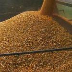 Цены на кукурузу 3 класса в ноябре 2015 года
