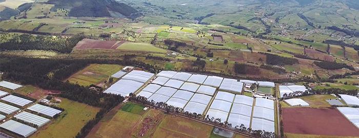 Плантация цветов в Эквадоре. Вид сверху.