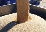 Пшеница 3 класса DAP Сары-Агаш, Казахстан wh.003KZ