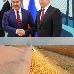 Россия-Монголия: выделили 7000 тонн кукурузы для поддержки комбикормовых заводов