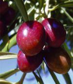 сельскохозяйственная продукция из Испании
