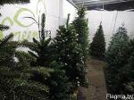 елки оптом, товары для дома и сада