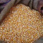 Цены на зерно в марте 2016 года