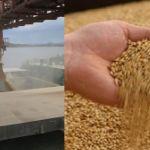 Цены на пшеницу в Малайзии в августе 2019 года