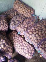 овощи от производителя