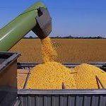 Цены на декабрь 2014 года: Кукуруза 3 класса ГОСТ 13634-90