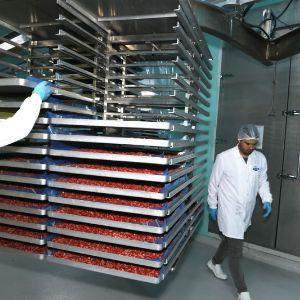 поставки сразу с завода Турция-Россия сублимированные фрукты и овощи. на сайте Видео о завода