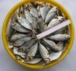 сушеная рыба от производителя без посредников