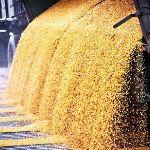 Цены на кукурузу в ноябре 2017 года