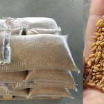Россия— Египет: цены на продовольственную пшеницу (на январь 2020 год)
