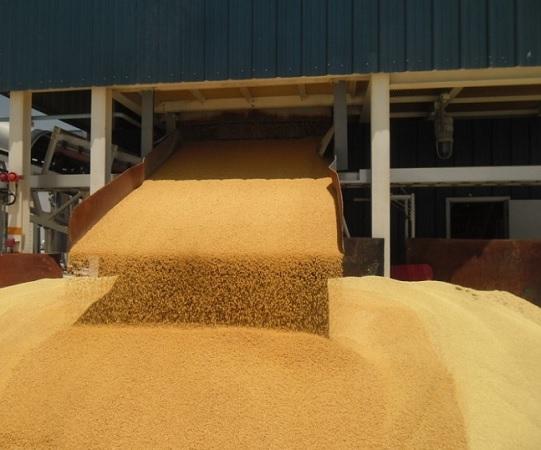 Поставки пшеницы в Саудовскую Аравию