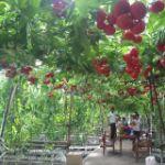 оптовые продажи овощей