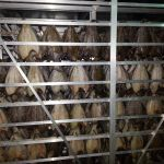 мурманская рыба от производителя