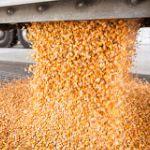Поставки кукурузы 7000 тн в Улаанбаатар, Монголия