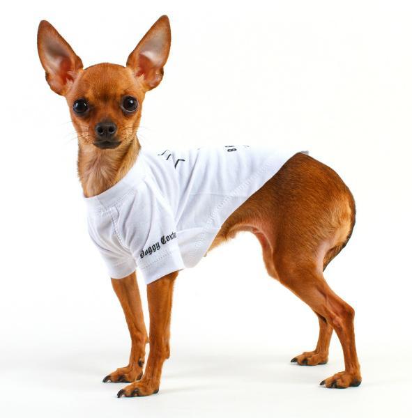 Одежда для собак оптом от производителей