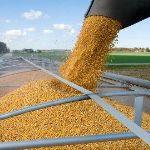 Цены на кукурузу в сентябре 2015 года в Грузии