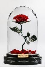 Роза в колбе на изогнутом стебле Foreverroses