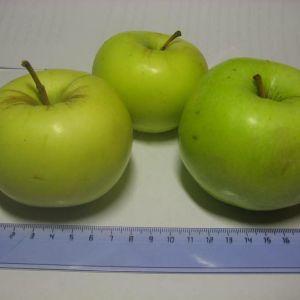 Яблоко от производителя . сорт  Синаб