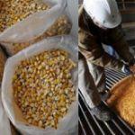 Цены на кукурузу в Иране в феврале 2019 года