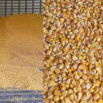 Цены на кукурузу в Иране (на январь 2019 год)