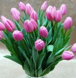 свежесрезанные тюльпаны оптом Новосибирск