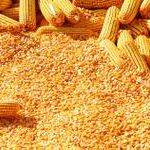 Цены на зерно в Иране (на январь 2017 год)
